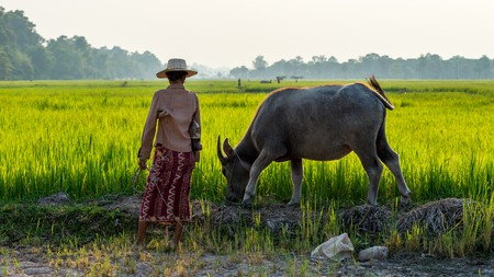 Cambodia is full of great landscapes | © MinghaiYang /  Shutterstock