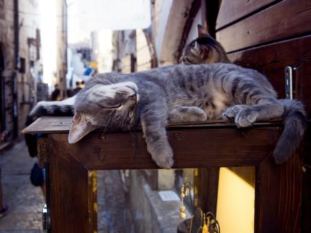 | © Lia Koltyrina/Shutterstock