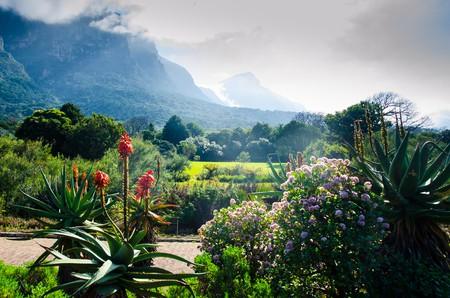 Kirstenbosch Botanical Gardens   © Shutterstock