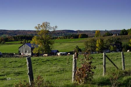 Farmland in Southern Ontario   © Sean Rosairo/ Flickr