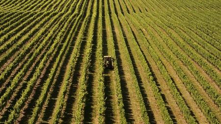 Vineyards | © Barni1/Pixabay