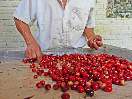 Colombian coffee beans | © Chris Bell