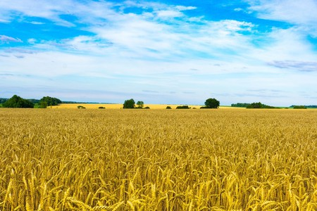 Ukrainian wheat fields | ©Alexeev_Alexey/Pixabay
