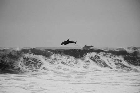 Dolphins jumping   © Jeremy Ricketts / Unsplash