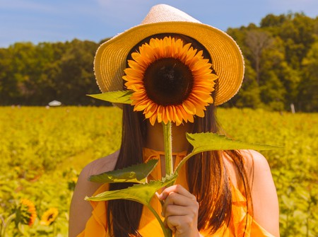"<a href = ""https://unsplash.com/search/photos/sunflower?photo=2HrxgCa6Yq8""> © Kyaw-Tun/Unsplash"