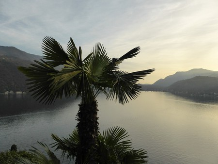 Ticino, palm trees and all | © Jaybee_01/ Pixabay