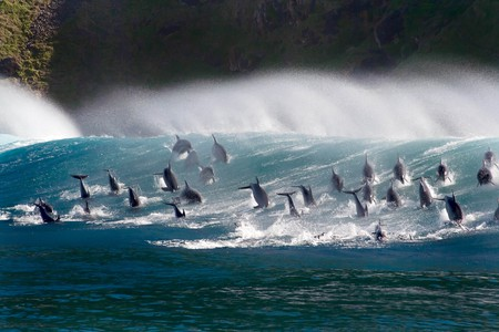 Surfing dolphins © AMC Networks
