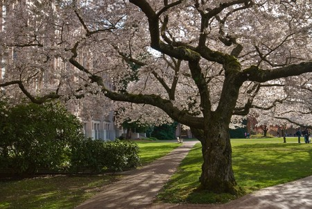 University of Washington Quad | © Steve Voght / Flickr
