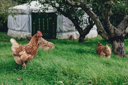 Farm Stays | © Annie Spratt/Unsplash