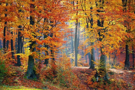 Beautiful fall colors   © Valiunic / Pixabay