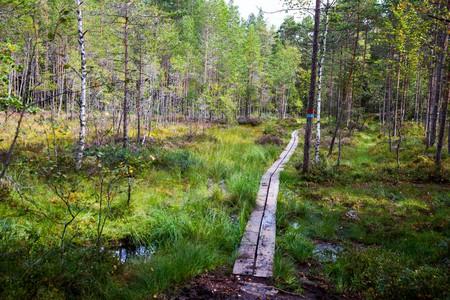 Østmarka wilderness area