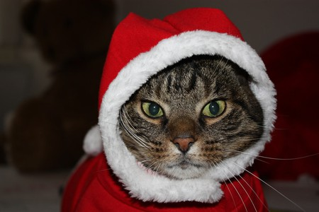 "Ho Ho Ho - ""Meowy Christmas"" 