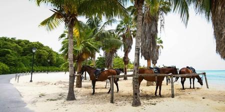 Horse Activity © https://www.halfmoon.com/activities/activity/equestrian-centre/