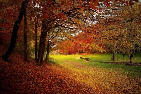 Autumn colours © valiunic / Pixabay