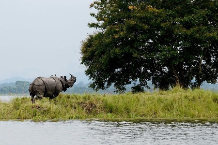 Kaziranga | ©Diganta Talukdar / WikiCommons