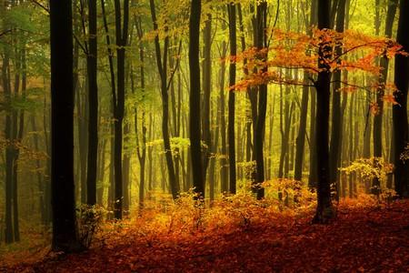 Black Forest | © Tom Tom / Shutterstock