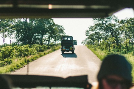 When on a game drive in a national park, don't leave the vehicle to pet animals   ©AnnaKate Auten/Unsplash