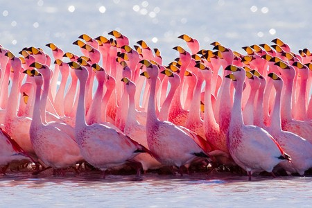 Yes, you can expect flamingoes in Montenegro