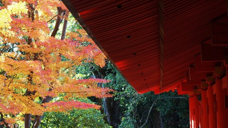 Kasuga Shrine in autumn
