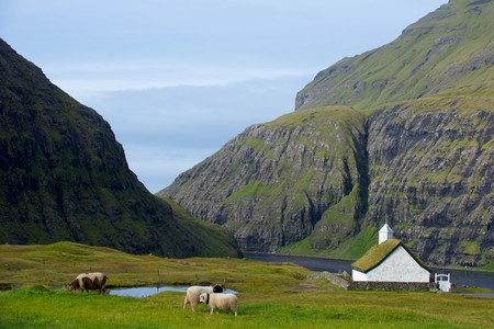Sheep roaming the Faroe Islands |
