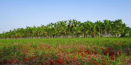 Mattur and Hosahalli are two villages in Karnataka, India that still speak Sanskrit | © sarangib / pixabay