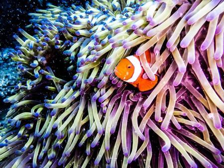 The Great Barrier Reef | © Benedikt Juerges/Shutterstock
