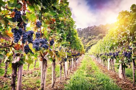 French vineyards in Autumn | © Symbiot/Shutterstock