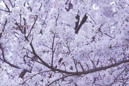 The world has a lot to learn from Japan   © Yuki Yoshida / Unsplash