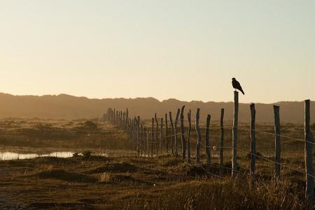 Blackbird in Chiloe | ©Tetraigofotos/Flickr
