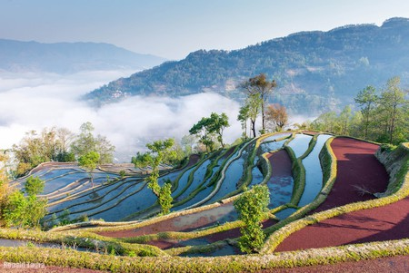 Sunrise color of rice terraces in Yuan Yang | © Donald Tagra / Flickr