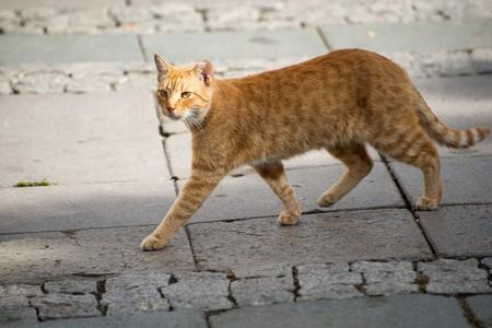 Street cat   © akras/Flickr