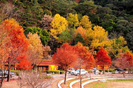 Autumn Trees in Taichung | © Arlene Hsu / Flickr