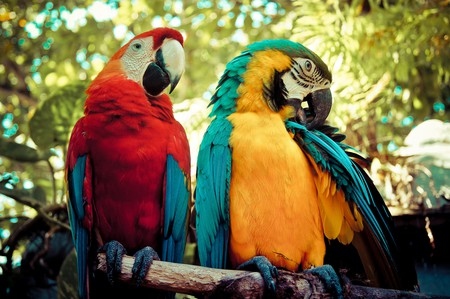 Birding in Colombia | © Maria Grazia Montagnari / Flickr