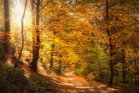 Discover Romania's extraordinary forests   © Seaq68/ Pixabay