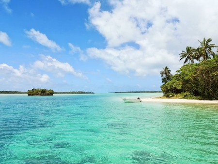New Pines in the archipelago of New Caledonia | © Sebastien Jermer/Unsplash