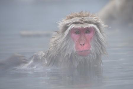 Monkey   © pen_ash/Pixabay