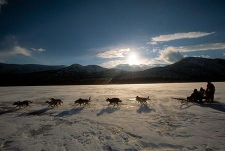 Dog sledding | © Staffan Widstrand / imagebank.sweden.se