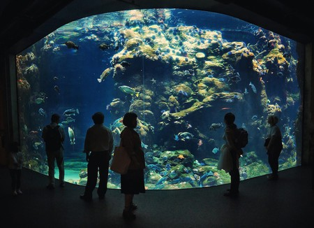 The Steinhart Aquarium | © Jonathan Lin / Flickr