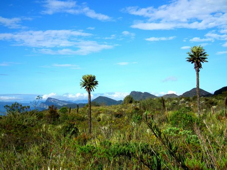 Chingaza National Park   © Chris Bell / The Culture Trip