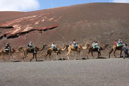 Lanzarote Camel Tour   © Frank Vincentz / WikiCommons