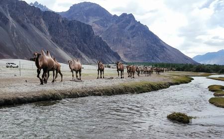 Nubra Valley   © Ashwin Kumar/Flickr