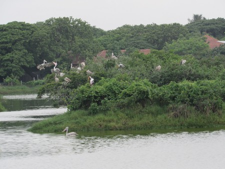 Migratory birds at the Tholkappiar Eco Park in Adyar |