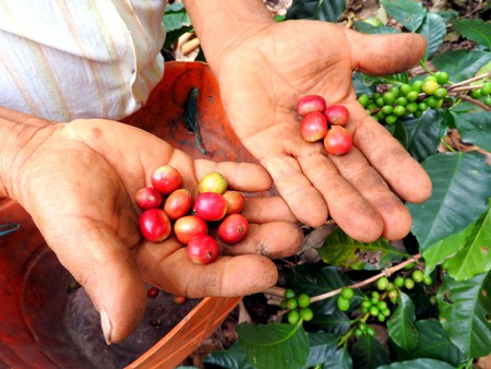 Colombian Coffee | © Chris Bell / Culture Trip
