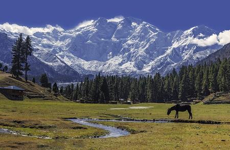 Fairy meadows with the glorious Nanga Parbat Mountain, Pakistan   © Imrankhakwani/WikiCommons