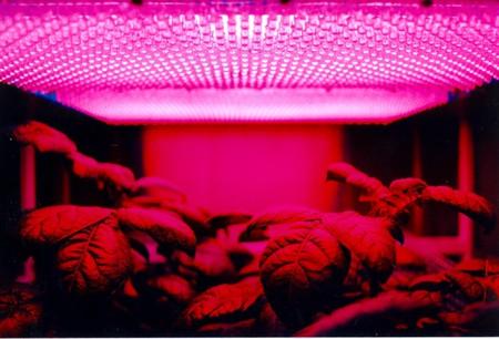 Plantagon have innovative new ways to grow food indoors | Courtesy of Plantagon.