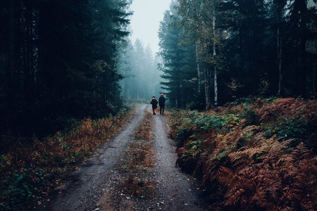 Walking in a Finnish forest | © Fredrik Ohlander / Unsplash