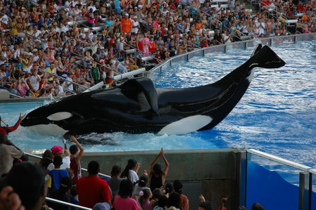 Shamu show at SeaWorld Orlando | ©Jasonshortes / WikiCommons