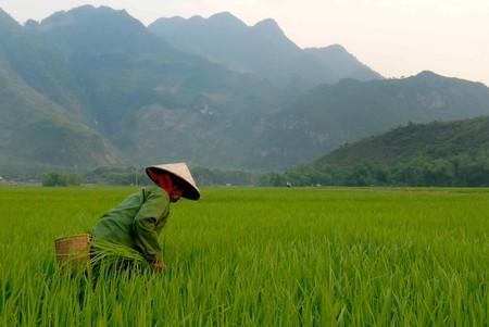 Scenic Vietnam | ©M M/Flickr