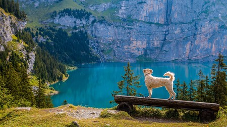 There are perks to being a dog in Switzerland | © Felix_Broennimann/Pixabay
