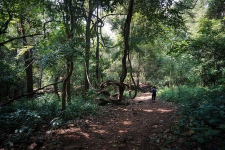 Marottichal Forest  | © Charishma Thankappan